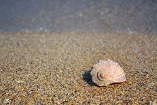 Free Shell On The Beach Stock Photography - 13762152