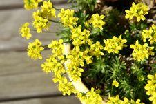 Free Yellow Spring Flowers Stock Photos - 13763283