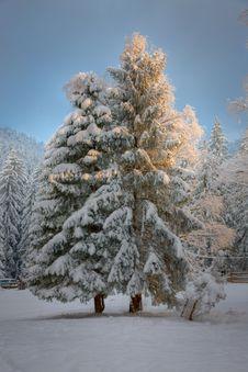 Free Snow Glow Stock Image - 13764151
