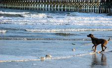 Free Dog On Beach Right Stock Photo - 13764160