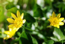 Free Spring Flowers Stock Photo - 13765340