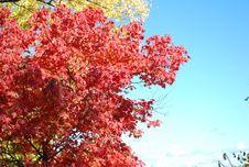 Free Bon Echo National Park Royalty Free Stock Photos - 13766228