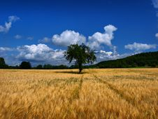 Free The Lonesome Tree Stock Image - 13767281