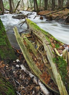 Free Broken Tree In River Stock Photo - 13767440