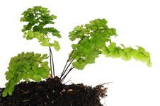 Free Plant. Growth Concept. Royalty Free Stock Images - 13767909