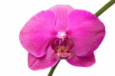 Free Close-up Pink Orchid Stock Photo - 13767940