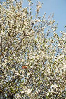 Free Springtime Background Royalty Free Stock Photo - 13768015