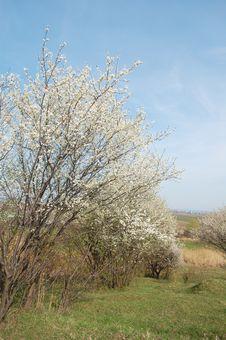 Free Spring Stock Image - 13768031