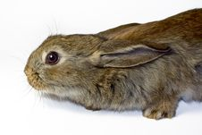 Free Rabbit 10 Stock Photos - 13768093