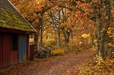 Free Autumn Road Stock Images - 13768434