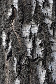 Free Bark Of Tree Stock Images - 13769224