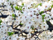 Free Spring Royalty Free Stock Photography - 13769297