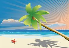 Free Palm Tree And Beach Stock Photos - 13769303