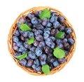 Free Freshly Picked Damson Plums Stock Image - 13771601