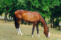 Free Horse On The Posture Royalty Free Stock Photo - 13777795
