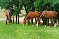 Free Horses On The Posture Royalty Free Stock Images - 13777939