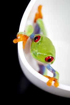 Free Nice Frog In Cup Stock Photos - 13770633