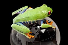 Free Frog On Globe Royalty Free Stock Images - 13770689