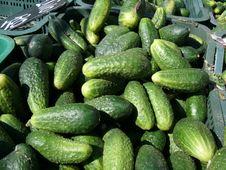 Free Cucumbers Stock Photo - 13772440