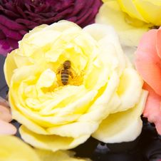 Free Roses, Bee Inside Royalty Free Stock Photo - 13774835