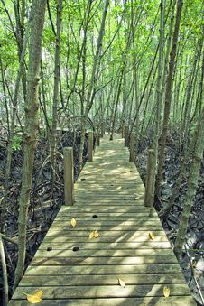 Free Mangrove Forest Stock Photography - 13775972