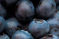 Free Blueberry Royalty Free Stock Photo - 13776535