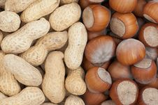 Free Nut Royalty Free Stock Image - 13776836