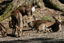 Free Deers Resting In Forest Stock Photography - 13776962