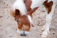 Free Horse Stock Photo - 13777300