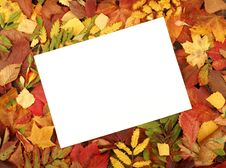 Blank Sheet Of Paper On A Autumn Frame Stock Photo