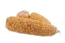 Peeled Corns Royalty Free Stock Image