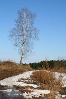 Free Spring Landscape Stock Image - 13779471