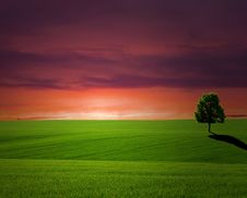 Free Tree On  Sunset Royalty Free Stock Photos - 13779998