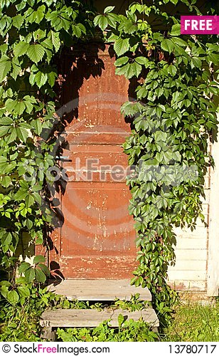 Free Old Door Twined An Ivy Royalty Free Stock Photography - 13780717