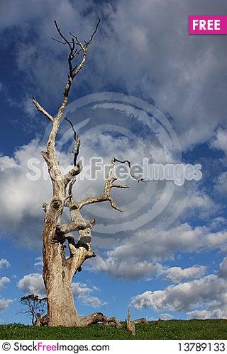 Free Dead Tree Stock Photos - 13789133