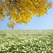 Free Autumn Tree Stock Image - 13780251
