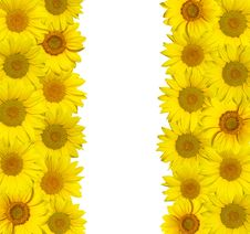 Free Sunflowers Isolated Royalty Free Stock Photography - 13780377