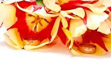 Free Tulips Stock Photos - 13780573