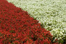 Free Flower Bed With Flowers Stock Image - 13780951