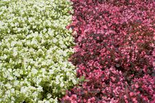 Free Flower Bed With Flowers Stock Photos - 13780983