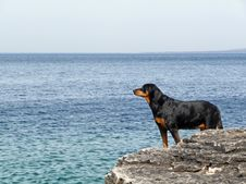 Free Dog Looking Across Water On Rocky Coast Royalty Free Stock Images - 13781149