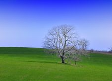 Free Green Grass And Lonely Tree Royalty Free Stock Images - 13781179