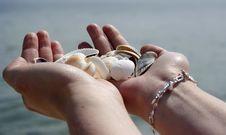 Free Shells Stock Photo - 13782540