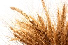 Free Wheat Royalty Free Stock Photos - 13783168