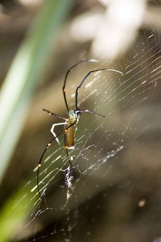 Free Spider On A Web Royalty Free Stock Photography - 13783237