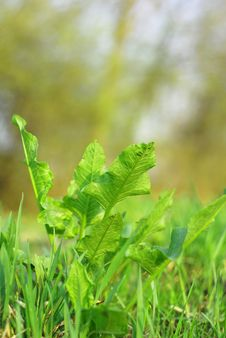 Free Fresh Green Herbs On The Field Stock Photography - 13783482