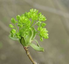 Free Fresh Green Leaves Closeup Royalty Free Stock Photos - 13783668