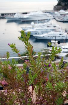 Monaco Harbor Royalty Free Stock Image