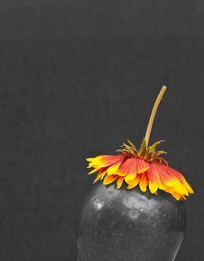 Free Conceptual Seasonal Apple Stock Photography - 13784442