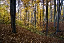 Free Autumn Forest On Hill Stock Image - 13786191